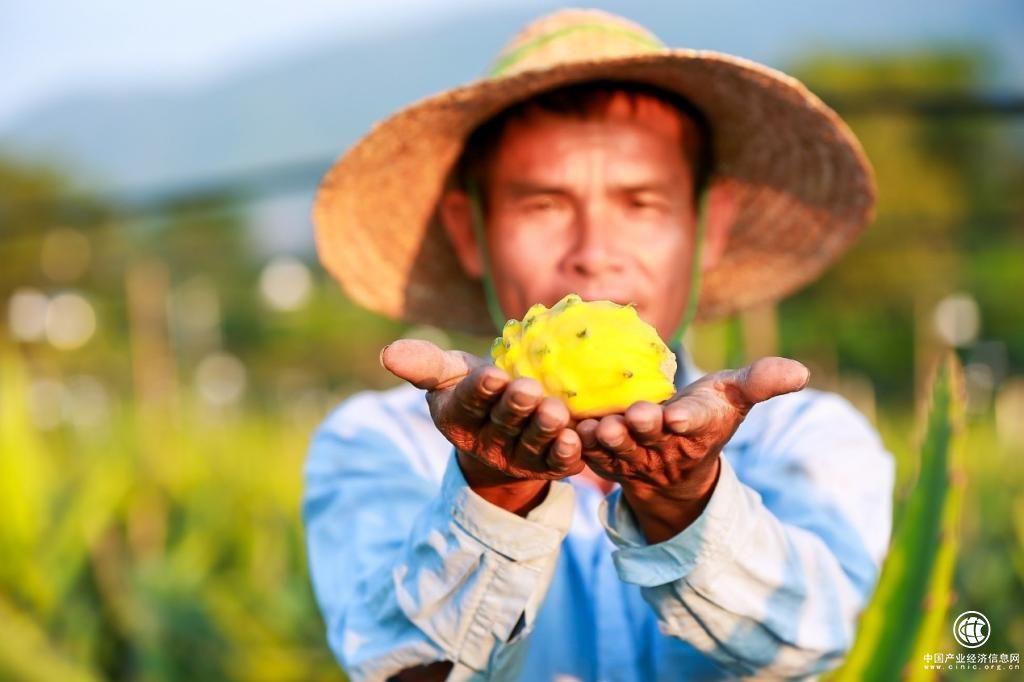 天猫双11背后的200万新型农民: