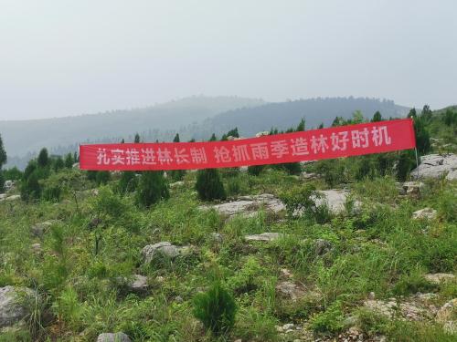 临沂市全面掀起雨季造林热潮